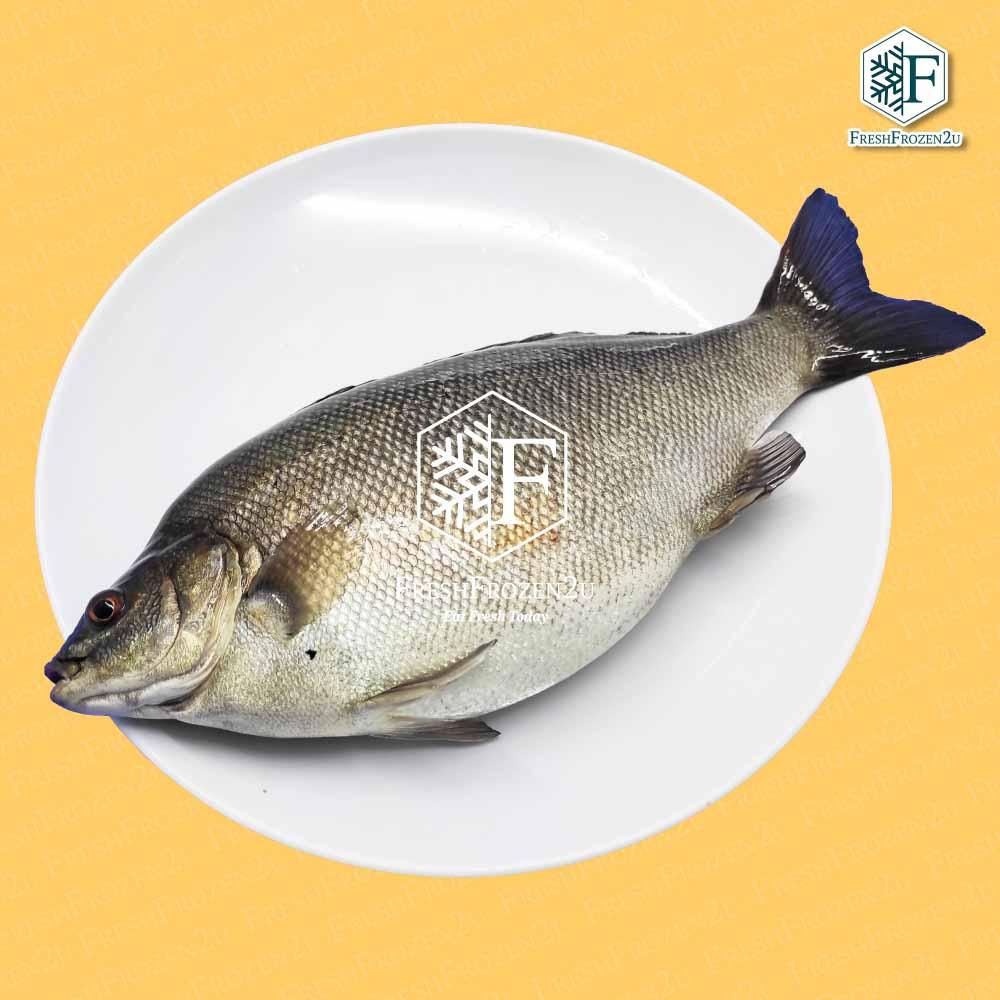Fish Jade Perch Cleaned (550 g) 宝石鲈鱼