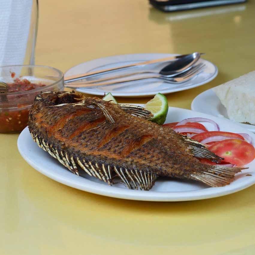 Red Tilapia 红非洲鱼