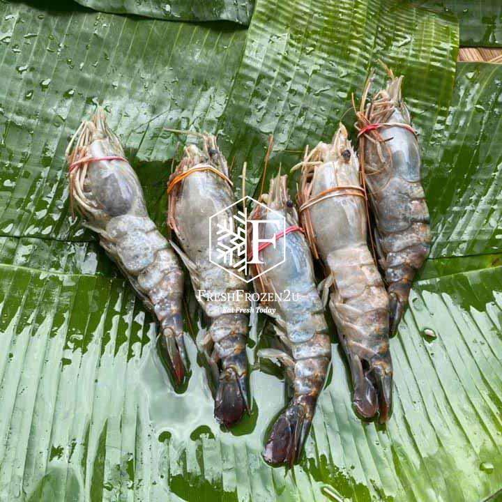Prawn Freshwater Scampi Sang Har (5 pcs) (650 g)