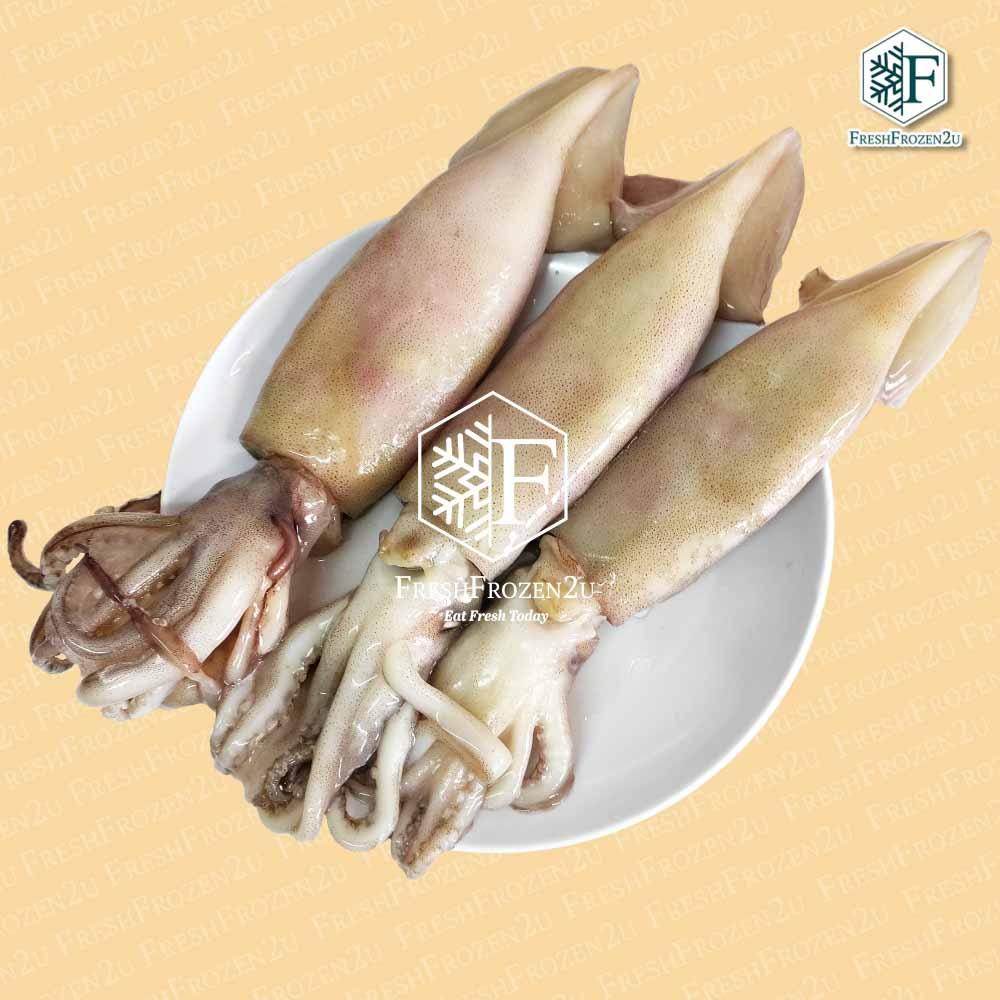 Squid Argentina (3 pcs) (800 g)