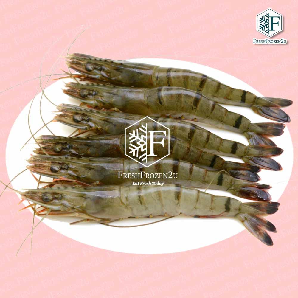 Tiger Prawn Cultured (16-20 pcs) (700 g) 虎虾
