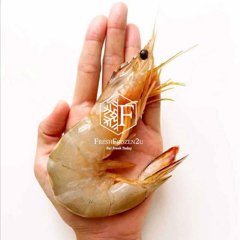 Sea White Prawn XXL (21-25 pcs) (700 g) 明虾