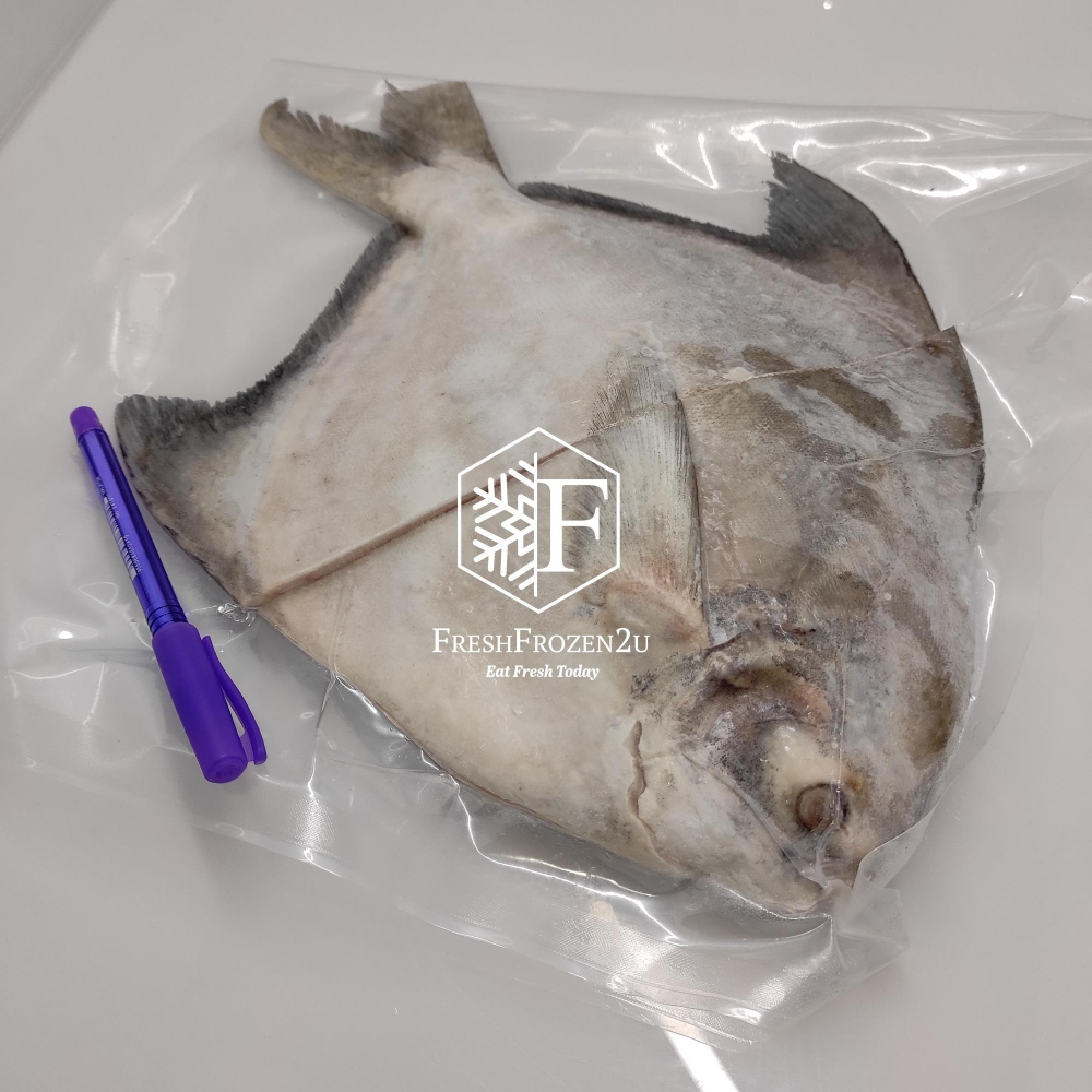 Fish Pomfret Chinese Cleaned (>1.1 kg) 沙巴斗鲳鱼