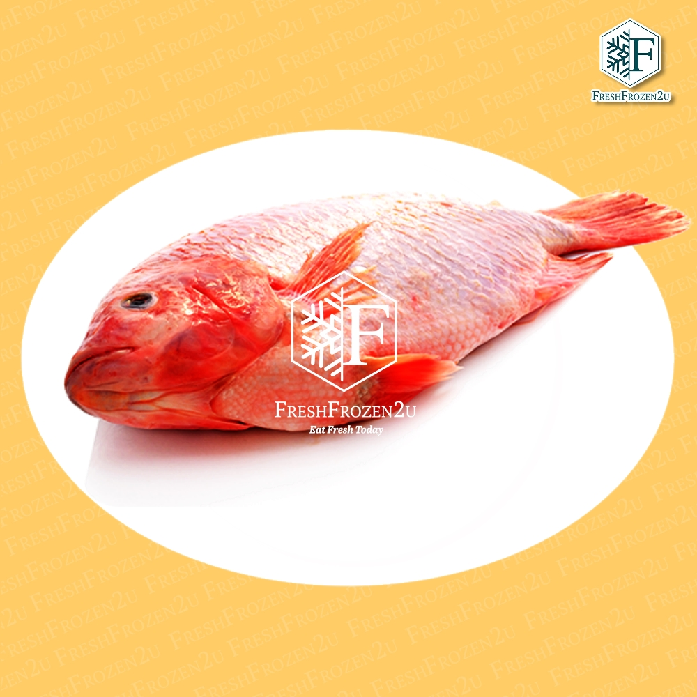 Fish Tilapia Red Cleaned 红非洲鱼 (550 g)