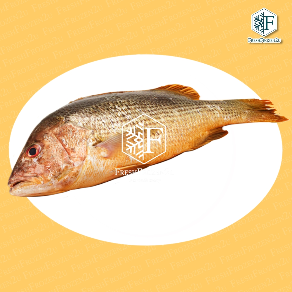 Fish Snapper Golden Cleaned (850 g) 金棗魚